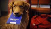 passaporto animale cane