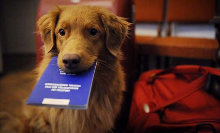 passaporto europeo animali